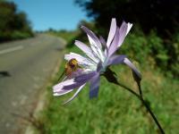 flowerandbee.JPG